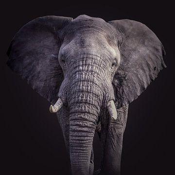 Elefantenporträt in Schwarz von Sharing Wildlife