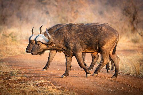 Buffalo Crossing van Thomas Froemmel