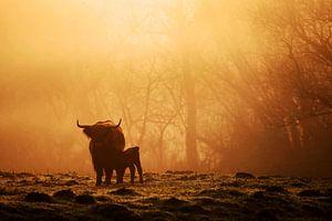 Koeien in de mist van Jeffrey Groeneweg