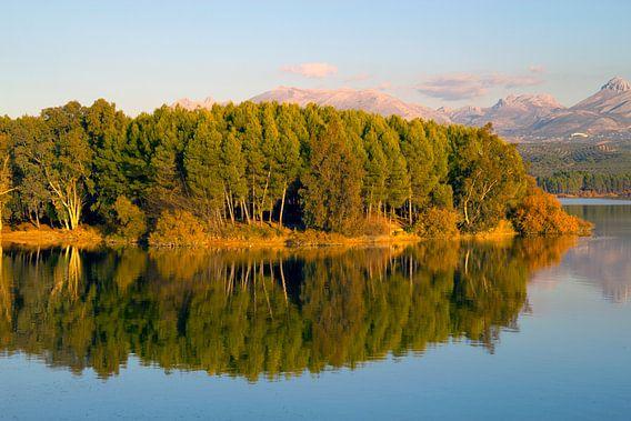 Forest Reflection van Cornelis (Cees) Cornelissen
