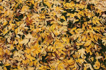 Blätter auf dem Boden von Bas Berk