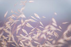 leaves in the wind van