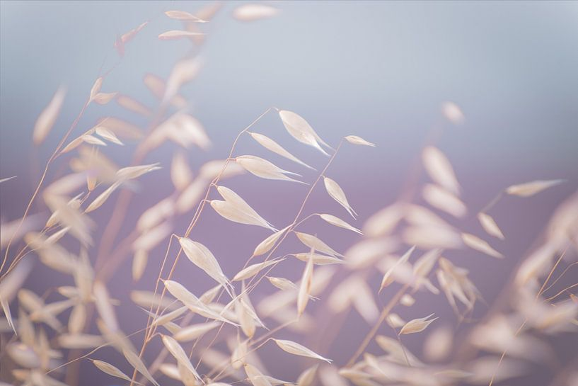 leaves in the wind van Hilde Van Hove
