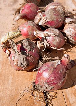 groenten0144 van Liesbeth Govers voor omdewest.com