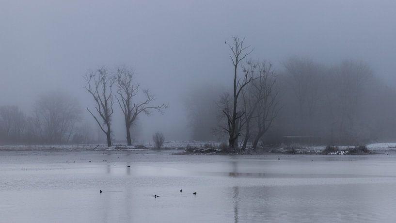 a mysterious winter landscape van Koen Ceusters