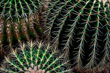 Cactus patronen