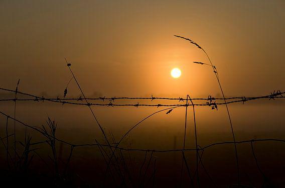 Prikkeldraad met opkomende zon