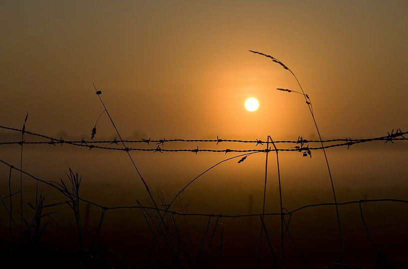 Prikkeldraad met opkomende zon van Wim Schuurmans
