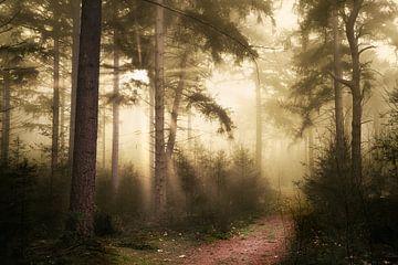 Nebel des Begehrens von Kees van Dongen