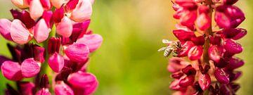 bloemen van Jeroen Mikkers