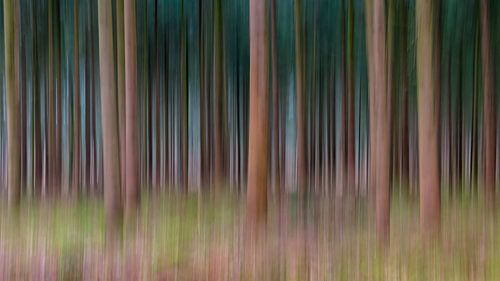 Lines Of Trees