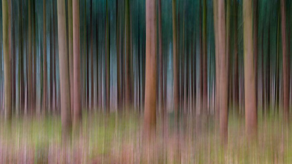 Lines Of Trees van William Mevissen
