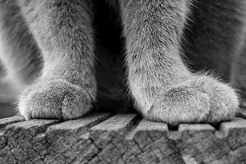 Werdende Beine von Jefra Creations