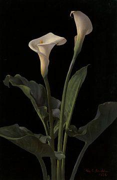 Calla Lilies, George Cochran Lambdin