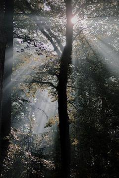 Herbstlicht im Wald von Jisca Lucia