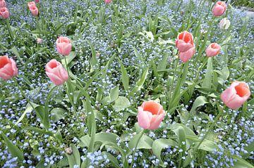 Flowers1 van Lyn Van Veldhoven