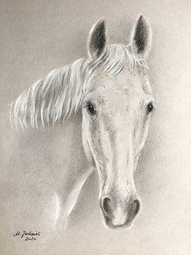 Paardenportret wit paard handgetekend van Marita Zacharias