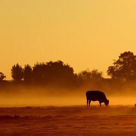 Koeien in de mist von hans van dorp
