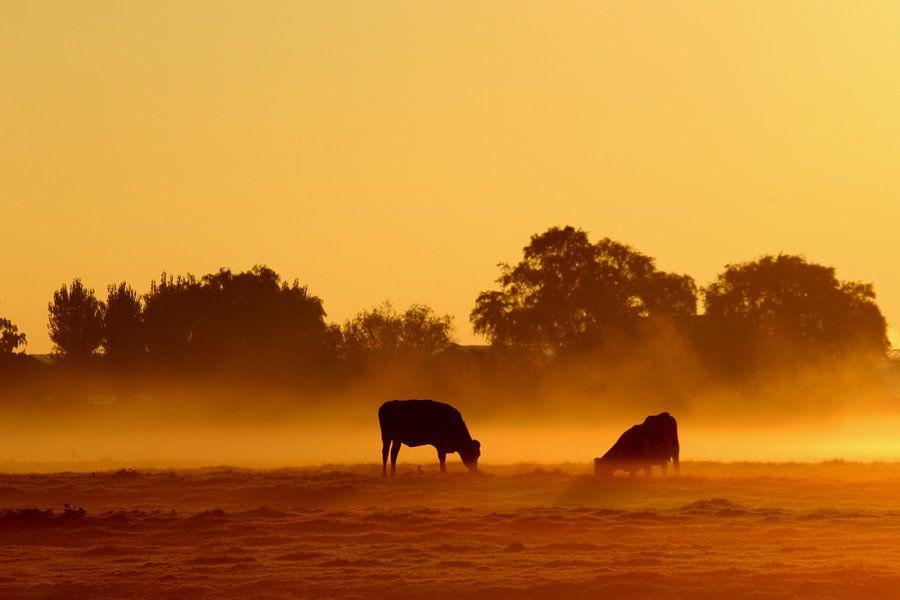 Koeien in de mist van hans van dorp