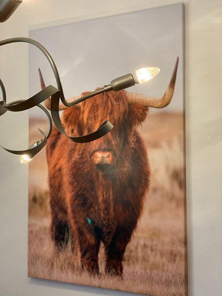 Klantfoto: Schotse Hooglander  van Menno Schaefer, op canvas