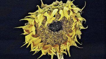 Die schöne Sonnenblume mit lässiger Frisur - Gemälde von Schildersatelier van der Ven