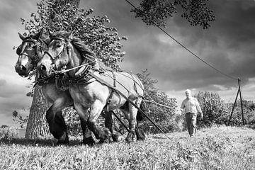 trekpaard, Holland, Nederland van Alain Ulmer