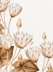 Lotus - Blumen
