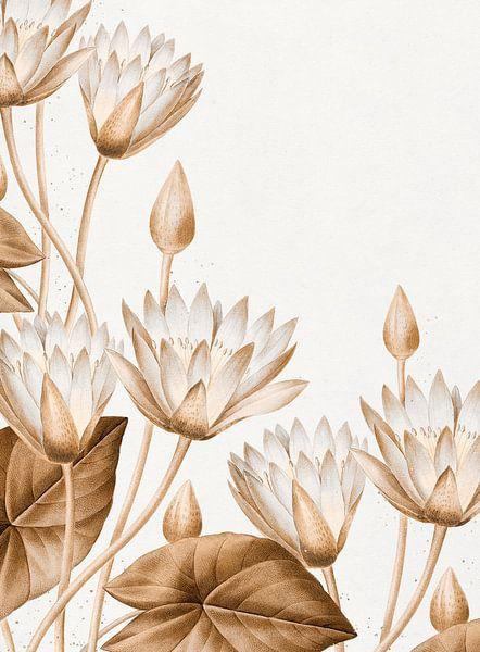 Lotus - Blumen von Rudy & Gisela Schlechter