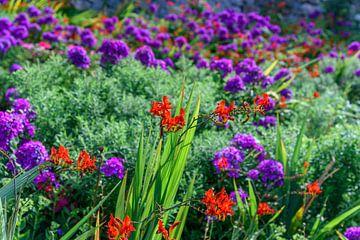 Gewoon mooie bloemen! van Paul van Baardwijk