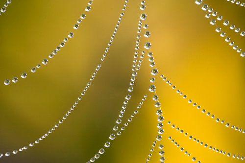 Spinnenweb met dauwdruppels