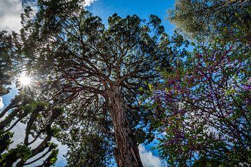 zon door de bomen van Johan Vet
