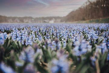 Lila Blumen von Sanne Dost