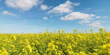 Feld mit Raps und blauem Himmel mit Wolken von Sky Pictures Fotografie