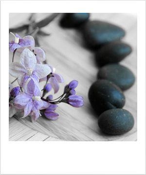 Fleurs et galets sur