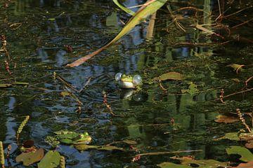 Blasen blasender Frosch von Bärbel Severens