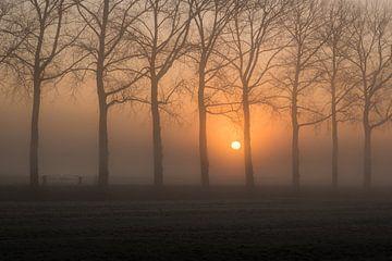 Zaun zwischen Bäumen von Moetwil en van Dijk - Fotografie