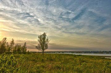 Eenzame boom in de Dintelse Gorzen van Frans Blok