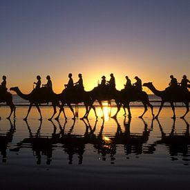 Panorama Kamelen met zonsondergang van Roel Dijkstra