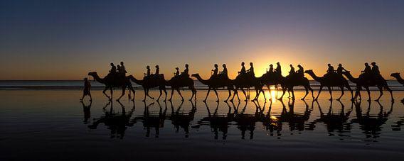 Panorama Kamelen met zonsondergang