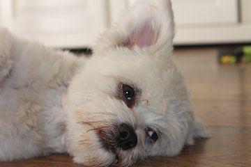 Luie Hond van Natasja van Dwingelen