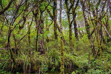 undurchdringliche Dschungel von Rietje Bulthuis