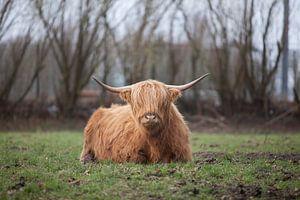 Highlander van Johann van der Geest