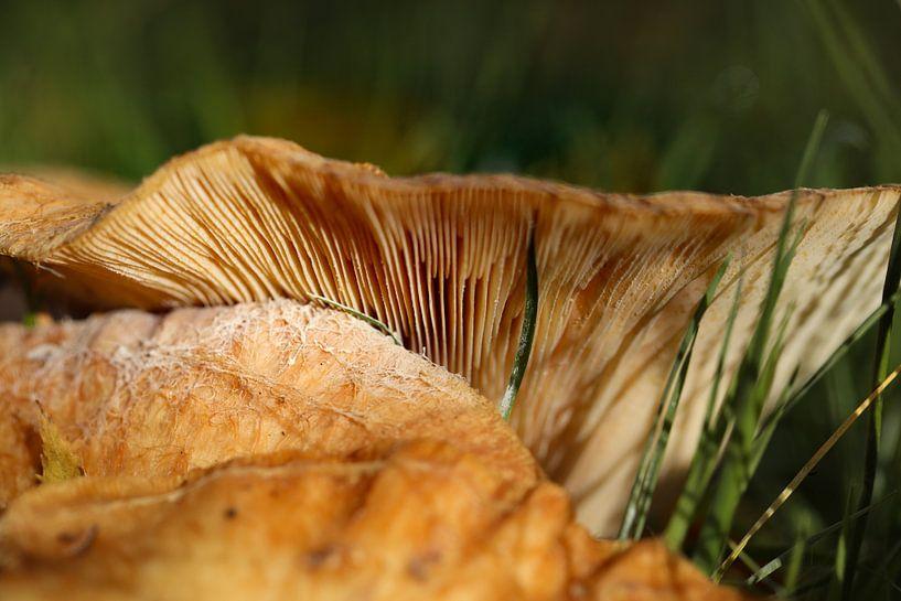 paddenstoel van Marieke Funke