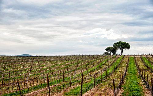 Wijngaard  van Anouschka Hendriks