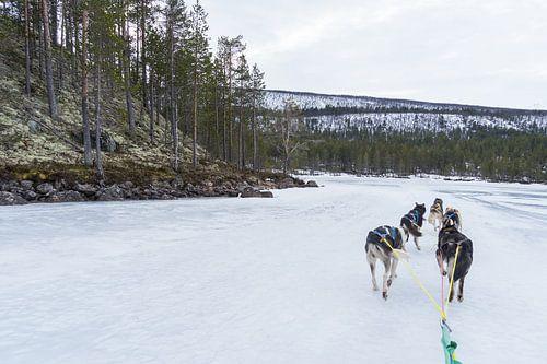 husky safari tocht Noorwegen van