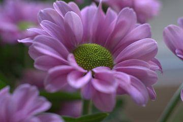 hübsch in rosa von Lucie Lindeman