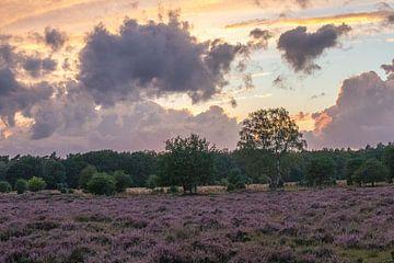 Heide bij Planken Wambuis van Bert van Wijk