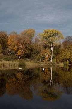 Herfst spiegeling van Daan Ruijter