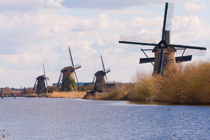 Rows Of Windmills van Brian Morgan