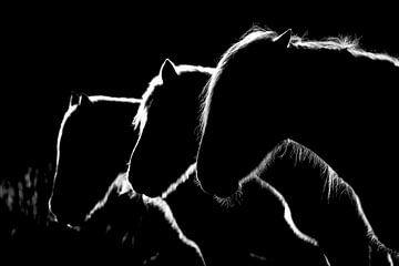 Pferde b & w, Michel Romaggi von 1x